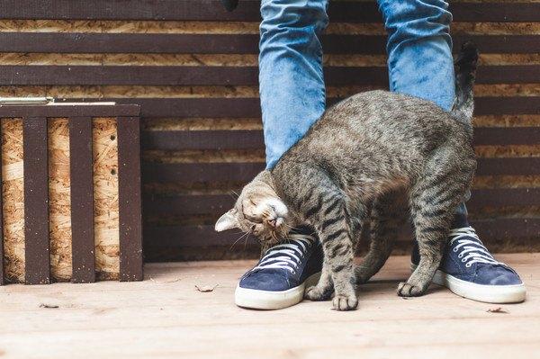 人の足元ですり寄る猫