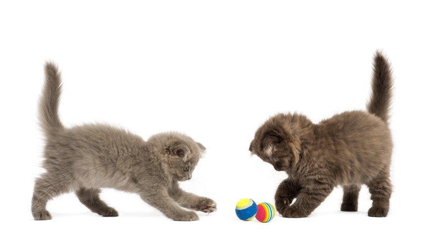 ボールで遊ぶ子猫たち