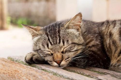 寝転がっている猫