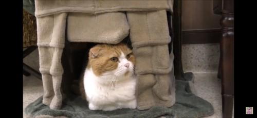 病院の猫さん