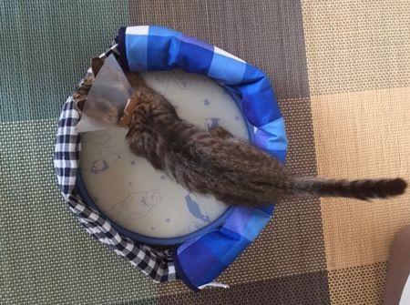 猫がベッドに入っている 尻尾まで写っている