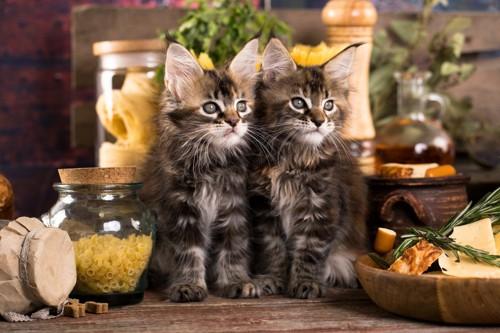 キッチンの猫2匹