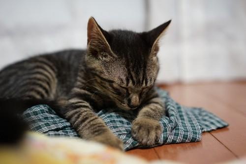 パジャマの上で寝ている猫