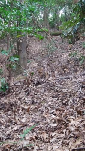 隠れ蓑猫1