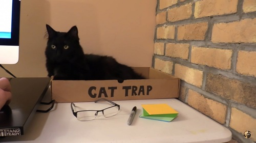空き箱と猫