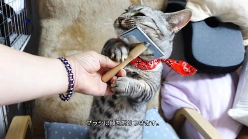 ブラシを持って顔にこすりつける猫
