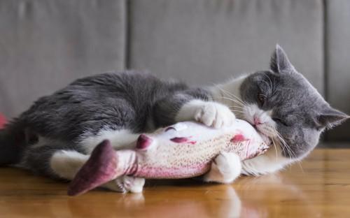 寝転んでオモチャに噛み付く猫