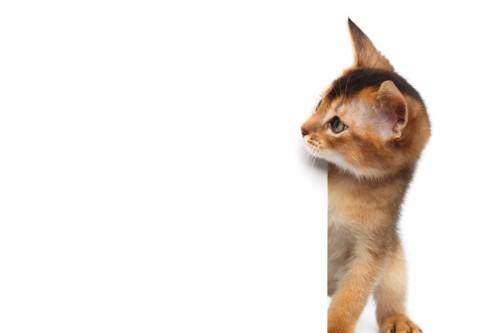 壁の向こうから見る猫