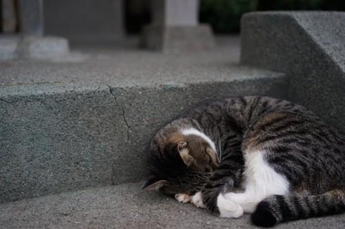 石段で顔を隠して眠るサバトラ