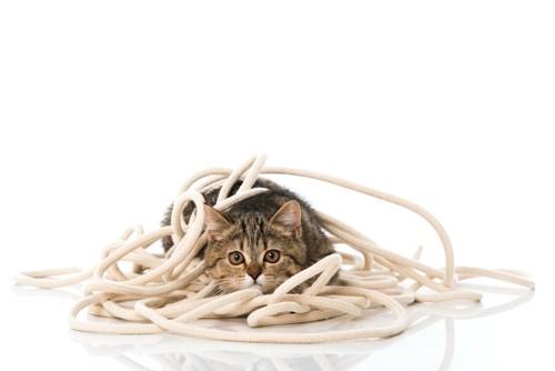 ロープに絡まる子猫
