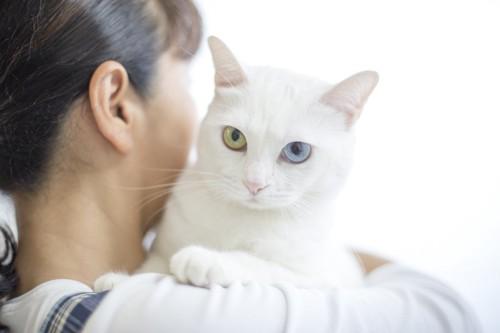 女性に抱かれているオッドアイの白猫