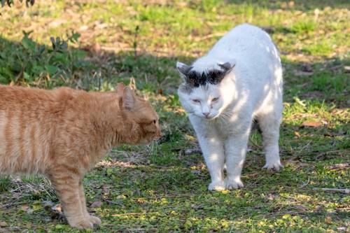 すれ違う2匹の野良猫