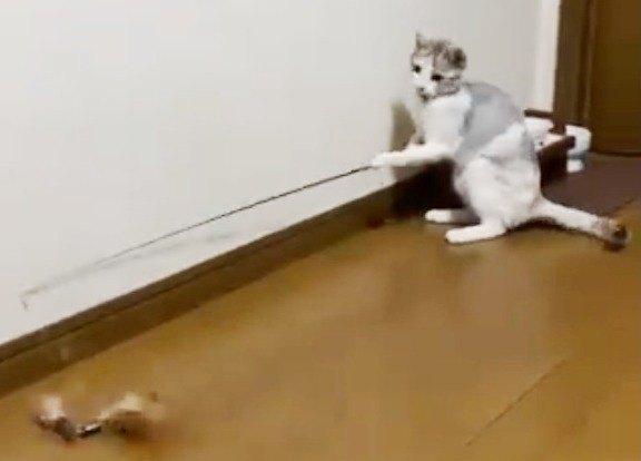 釣り竿でひとり遊ぶ猫のふーちゃん