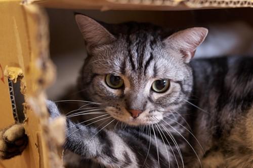 隙間から覗いている猫