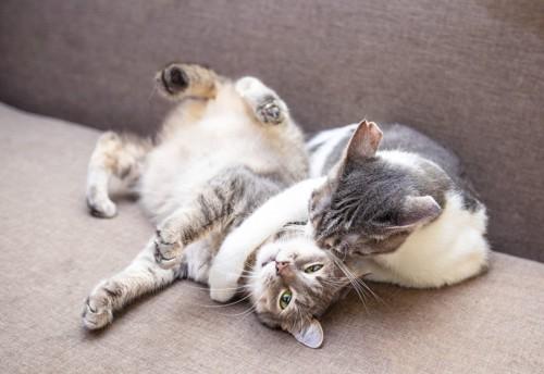 取っ組み合う猫たち