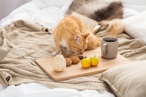 豆の匂いを嗅ぐ猫