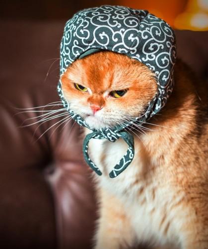 バンダナをかぶった猫