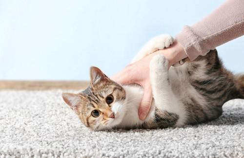手につかまる猫