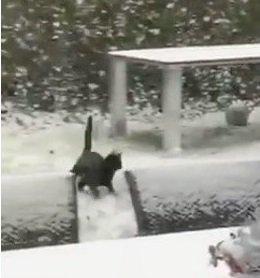 トンネルをくぐる猫