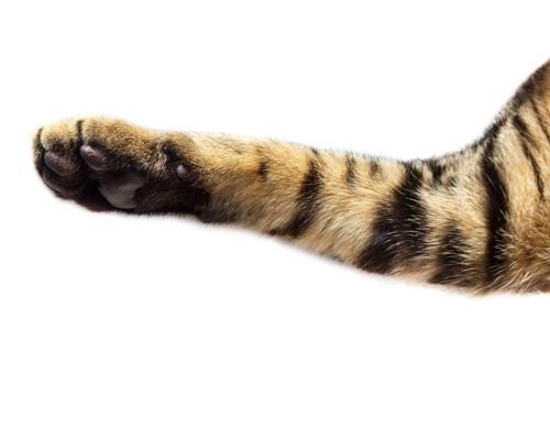 猫の手アップ