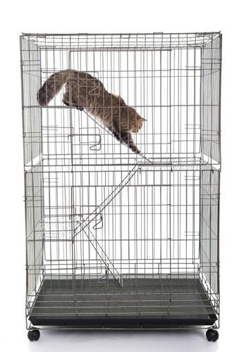 ケージの中で遊ぶ猫