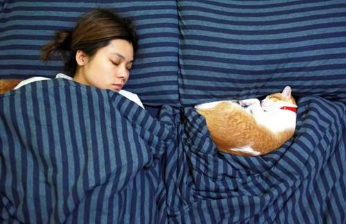 女性と一緒に眠っている猫