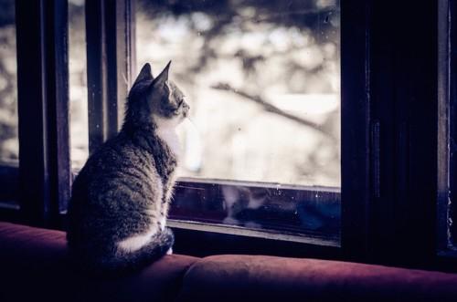 窓の外を見つめる子猫の後ろ姿