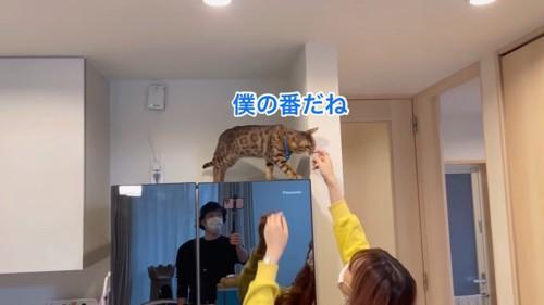 冷蔵庫の上の猫