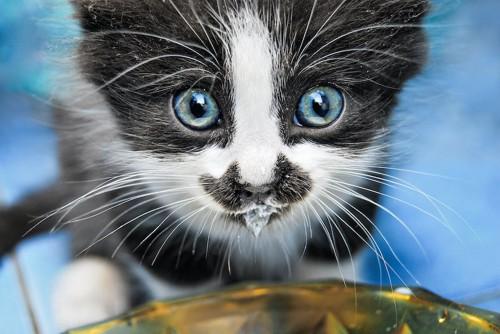 口の周りにミルクが付いている子猫