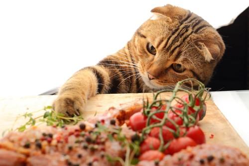 野菜を触る猫