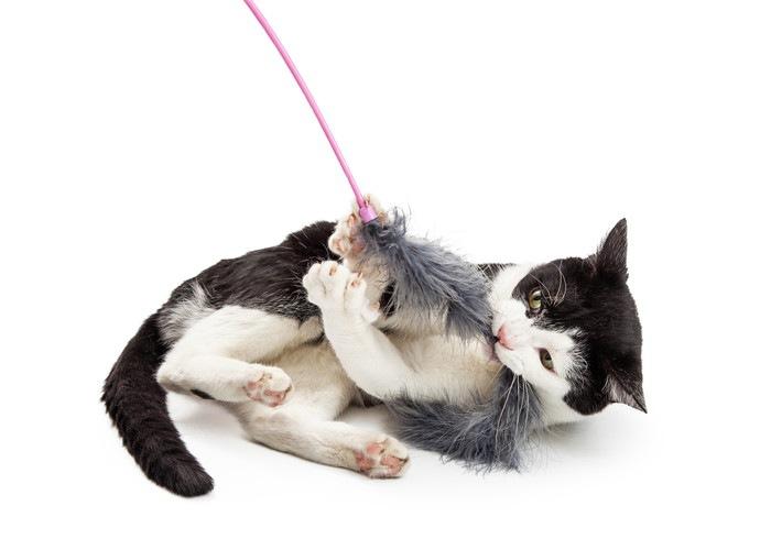 おもちゃとじゃれる猫