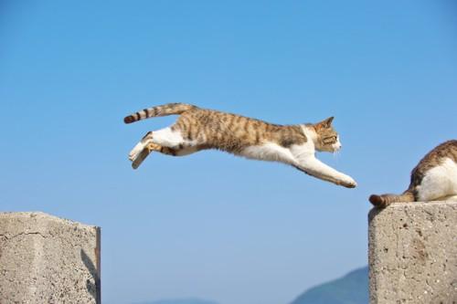 外の壁と壁を渡ろうとジャンプしている猫