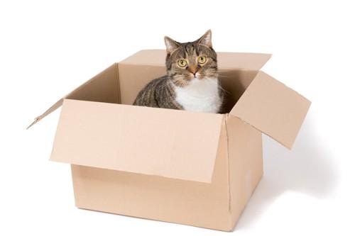段ボール箱の中に入る猫