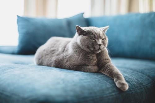 青いソファーで目をつむる猫