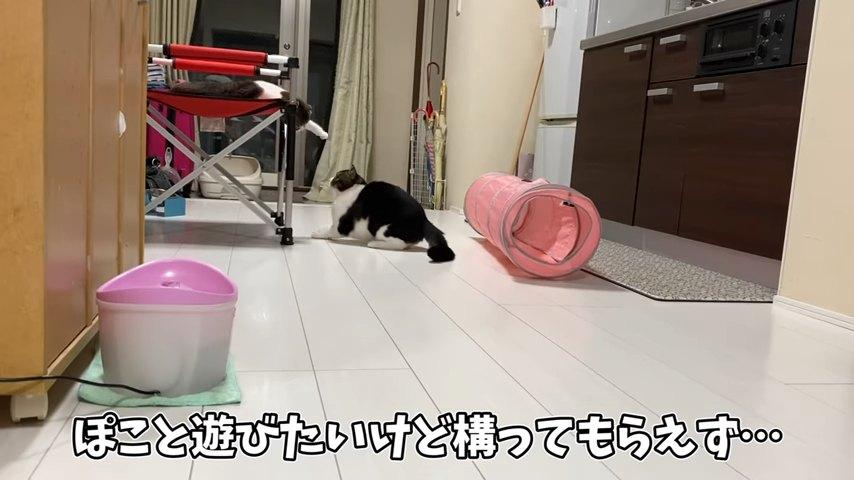椅子の上にいる猫と下にいる猫