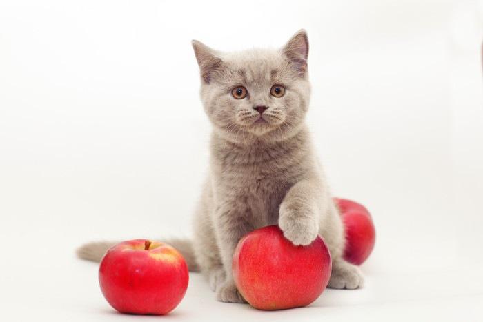 リンゴと猫