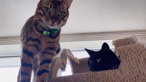 緑色の鈴の猫と黒猫