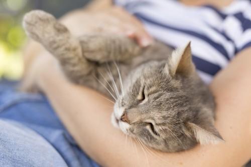 飼い主のお腹に乗って眠る猫