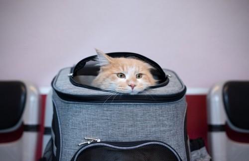病院の待合室でキャリーバッグから顔を覗かせる猫