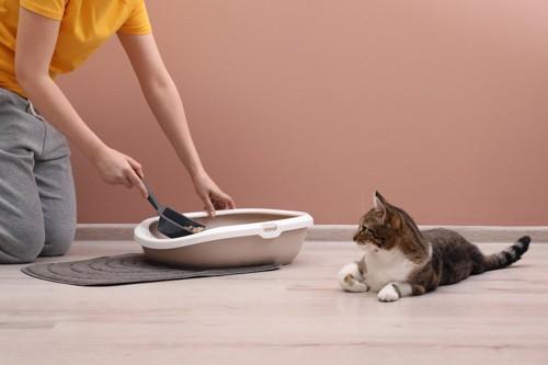 猫のトイレを掃除する人とそれを見ている猫