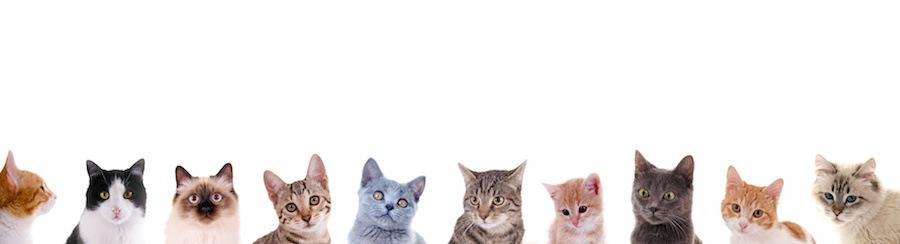 横に並んだ様々な種類の猫