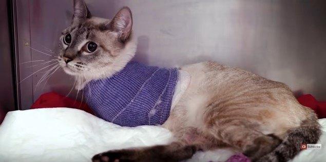 上半身に包帯を巻いた猫
