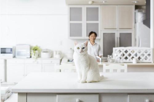 キッチンのテーブルに座る猫