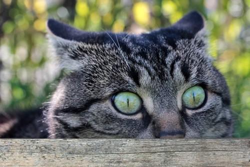 木のからのぞくトラ猫