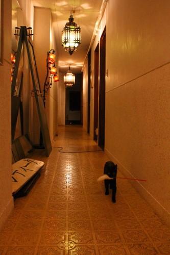 神戸の猫カフェ「アンティークアナスタシア」の廊下