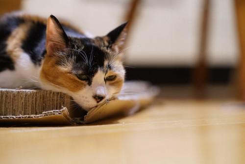 爪とぎの上でくつろぐ三毛猫