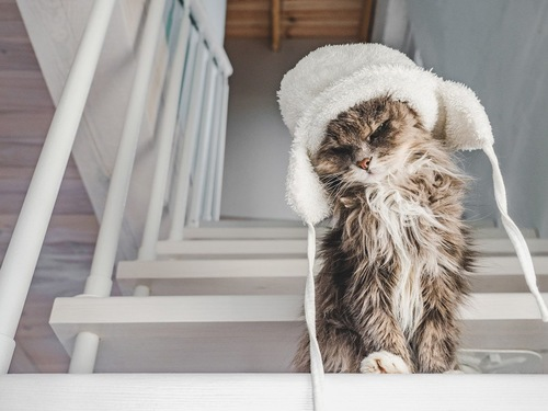 階段で白い帽子を被る猫