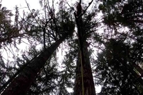 フィネガンが立ち往生する木