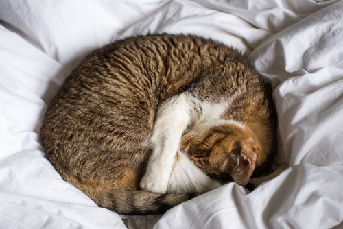 寒さを感じている猫