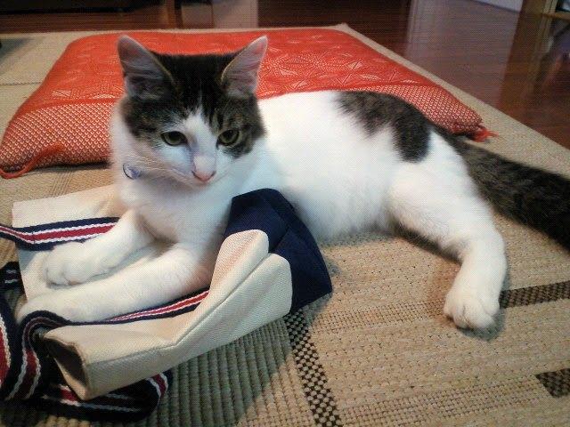 バッグの上に寝そべる子猫